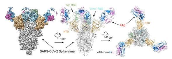 我国科学家在新型冠状病毒抗体研究中取得重大突破